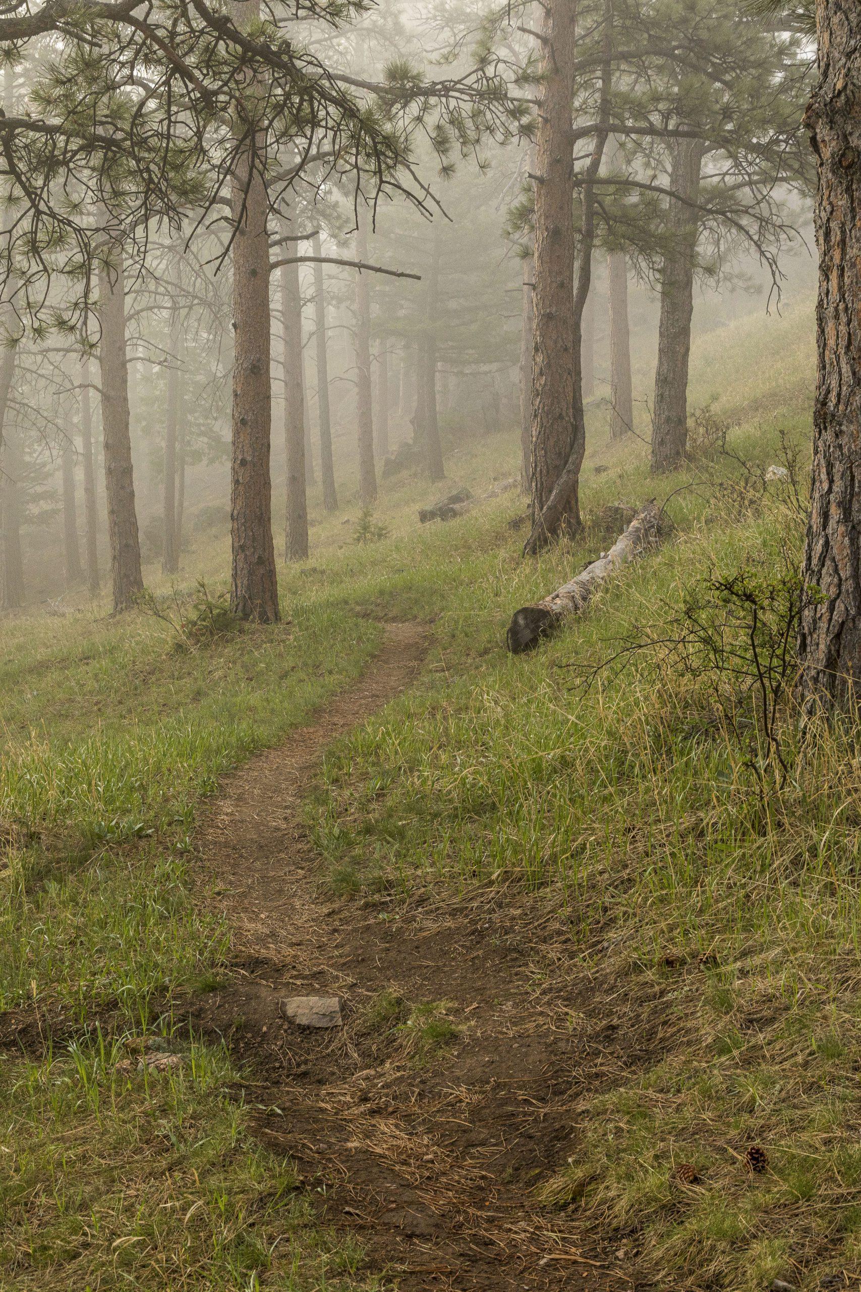 v2- Upper Montane Fog with Trail